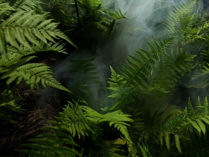 22 ივნისი - წვიმის ტყის მსოფლიო დღე